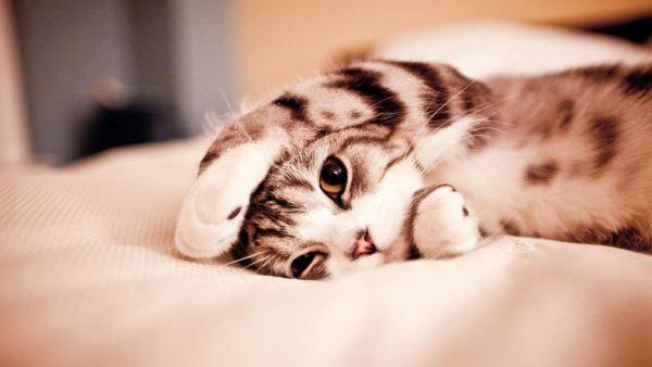 cat01201-1024x576
